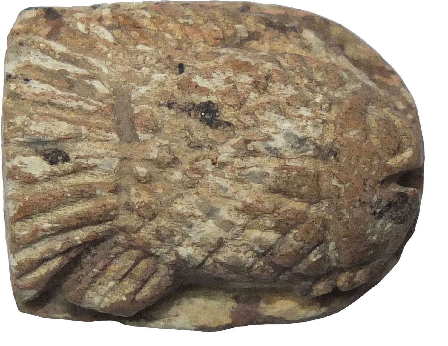 An Egyptian steatite scaraboid in the shape of a fish